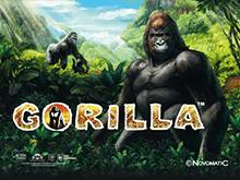 В Вулкане 24 автоматы Gorilla