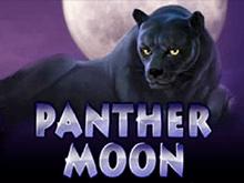 В казино Вулкан Делюкс Panther Moon