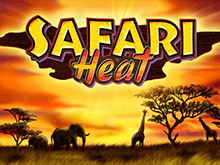 В Вулкане 24 автоматы Safari Heat